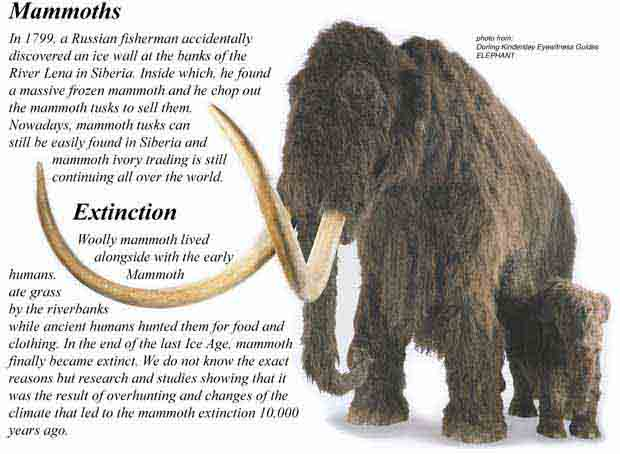 งาช้างแมมมอธสมบูรณ์ (Mammoth Tusk Perfect) - Out of Stock 7
