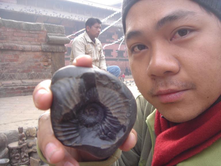 ฟอสซิลหอยทะเลแอมโมไนต์ (Ammonite)บนพื้นที่สูงของเทือกเขาหิมาลัย 6
