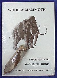ชิ้นส่วนกระดูช้างแมมมอธ