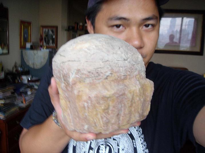 ไขไดโนเสาร์ (Sauropod Dinosaur Egg) สัตว์กินพืช 3
