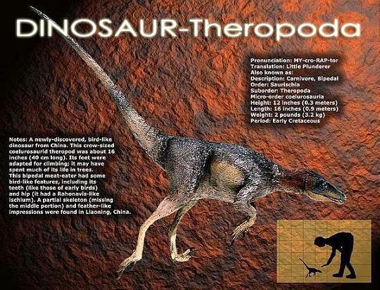ฟอสซิลฟันไดโนเสาร์เทอโรพอด (Fossil Theropoda tooth) ชิ้นที่1 5