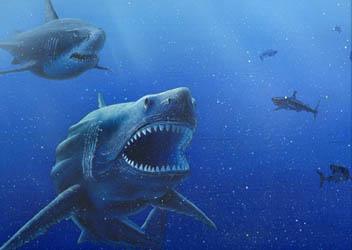 ฟอสซิลฟันปลาฉลามขนาดใหญ่สายพันธ์ \'เมก้าโรดอน\' (ขนาด 3 นิ้วเศษ) 4