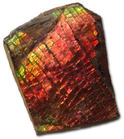 Ammolite หรือ เกร็ดมังกร - สินค้าหมด! 2
