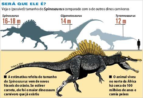 ฟันไดโนเสาร์สไปโนซอรัส - ขนาดใหญ่ (SPINOSAURUS TOOTH Dinosaur Fossil AFRICA) 3