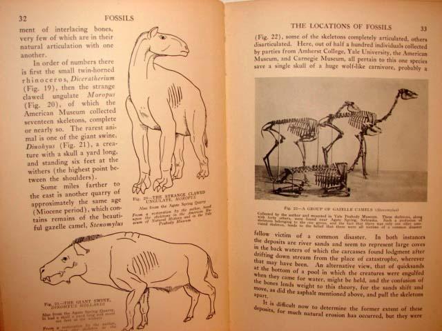 1931 FOSSILS Book PALEONTOLOGY University Society 4
