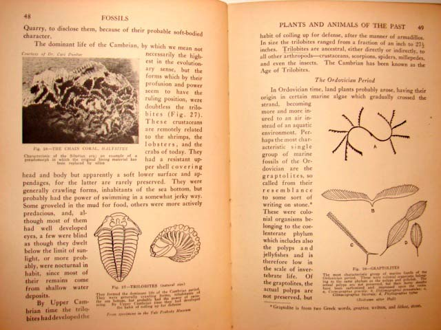 1931 FOSSILS Book PALEONTOLOGY University Society 5