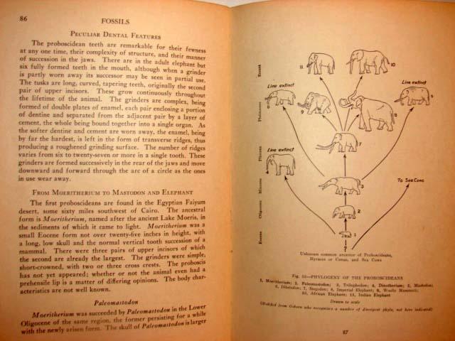 1931 FOSSILS Book PALEONTOLOGY University Society 7
