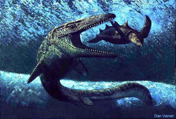 ฟอสซิลกรามฟันไดโนเสาร์ขนาดใหญ่ (Fossil Mosasaur Jaw  Teeth In Matrix) 6