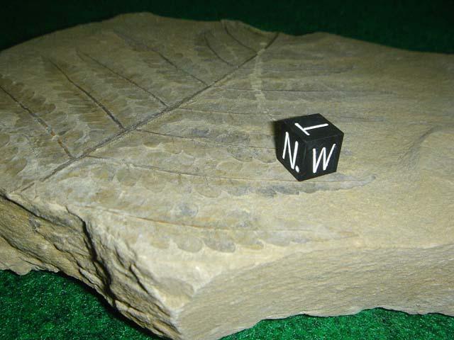 ฟอสซิลใบไม้ในแผ่นหิน 3
