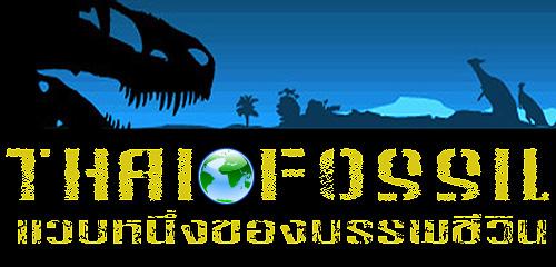 ฟอสซิลฟันไดโนเสาร์ไทยแรนโนซอรัส T-Rex (Tyrannosaurus rex tooth - 2.5 inch) 8