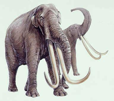 ชิ้นส่วนฟอสซิลงาช้าง (Mammoth Tusk) 8