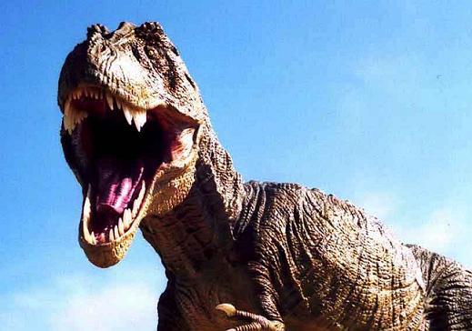 ฟอสซิลฟันไดโนเสาร์ไทยแรนโนซอรัส T-Rex (Tyrannosaurus rex tooth - 2.5 inch) 7