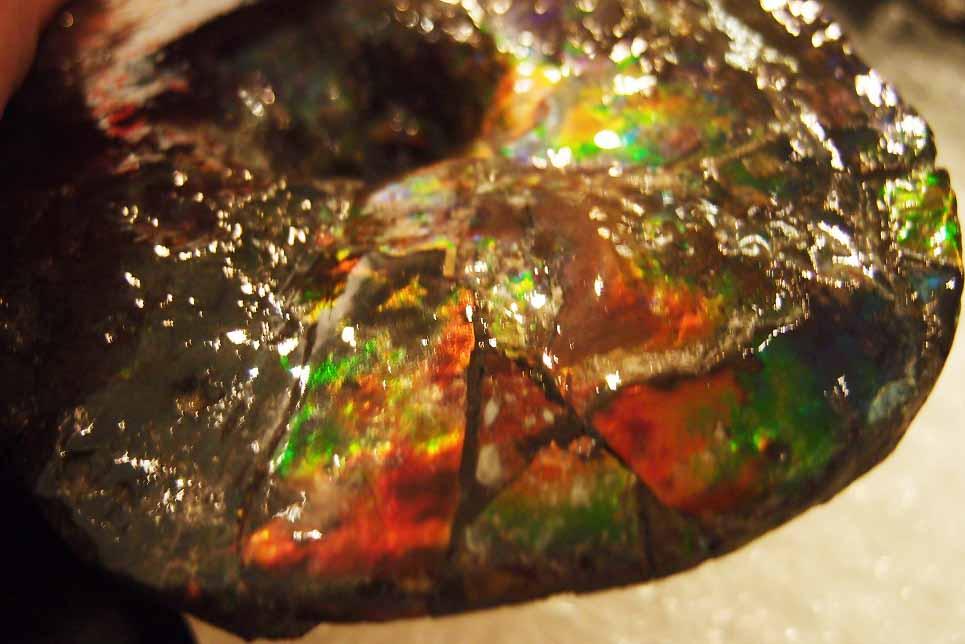 Ammolite หรือ เกร็ดมังกร - จำหน่ายแล้ว! 4