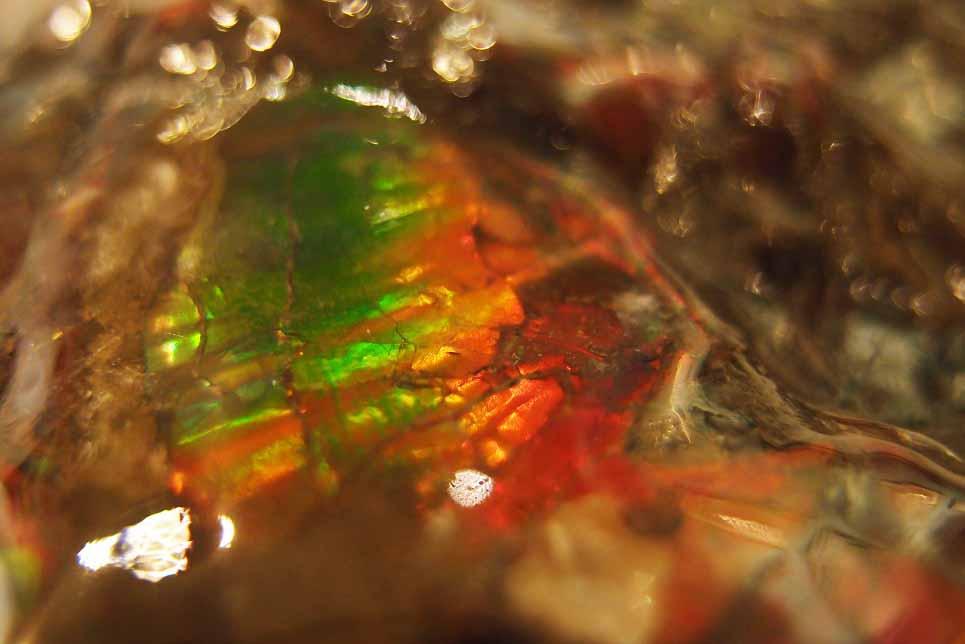Ammolite หรือ เกร็ดมังกร - จำหน่ายแล้ว! 5
