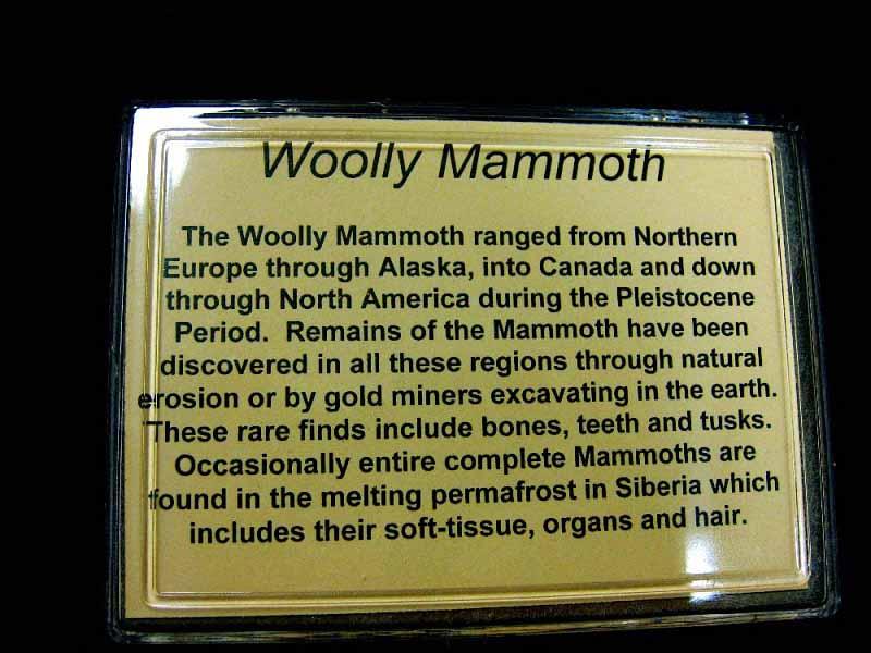 ชิ้นส่วนงาช้างแมมมอธ (Woolly Mammoth Tusk Ivory) 2