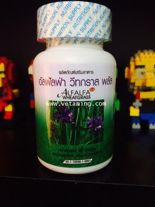 อัลฟัลฟา วีทกราส ผักเม็ด 6 สายพันธุ์ Alfalfa Wheatgrassซื้อ1แถม1