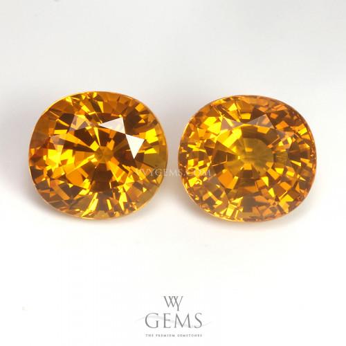คู่ต่างหูบุษราคัม(Yellow Sapphire) น้ำหนักรวม 8.31 กะรัต น้ำทอง ไฟเต็มเม็ด